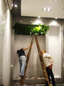 Чем отличаются наши вертикальные сады от европейских фитостен