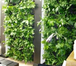 Кейс технологии вертикального озеленения