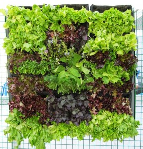 Новые технологии :вертикальные огороды