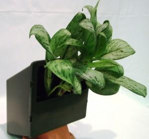 Модуль вертикального озеленения (комплектация 1), без упаковки, для фитодизайнеров.