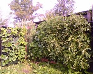 вертикальные огороды на даче