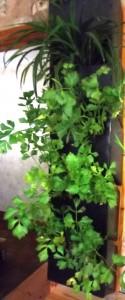 Прибыльная зелень: зачем ресторану свой огород?
