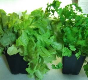 Вертикальные огороды в магазинах и точках питания