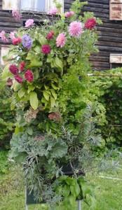 вертикальный сад осенью