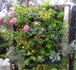 вертикальные огороды
