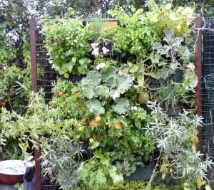 Дачные сады- огороды