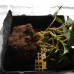 Растение с земляным комом размещаем на решетке с геотекстилем