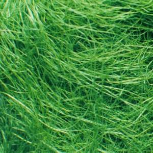 sisal_fiber_d-green-500x500