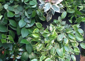микс-группа растений1