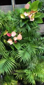 Комфортная микросреда за счет комнатных растений