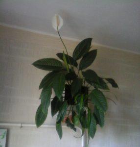 Подарок настенный букет из горшечных растений