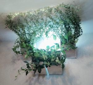 потолочное озеленение лианами с внутренним светильником