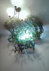 потолочное озеленение лианами с внутренним и внешним светильником