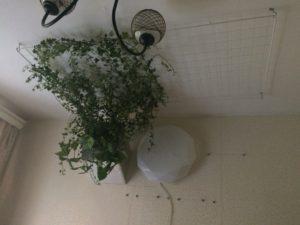 потолочное озеленение лианами, этапы монтажа
