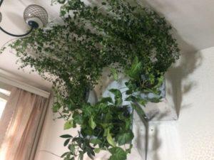 потолочное озеленение