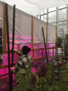 Конструкции для проведения научных исследований по составу идеального грунта для вертикальных садов