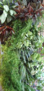 Очное обучение созданию вертикального сада