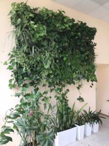 Рост растений в фитостенах на модулях редкого полива