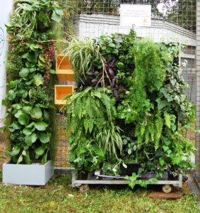 Вертикальный сад на модулях редкого полива - мастер класс