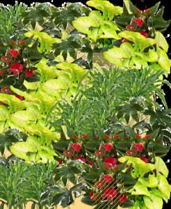 Добавлены картинки растений в конструктор вертикального сада