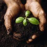Сообщество оздоравливающих садов