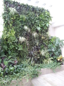 Как растения нивелируют физические загрязнения микросреды помещения