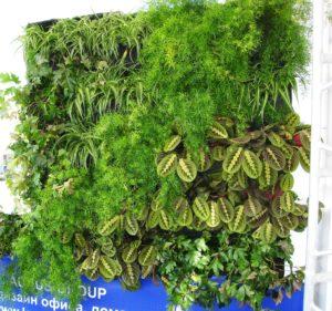 Растения нивелируют физические загрязнения микросреды