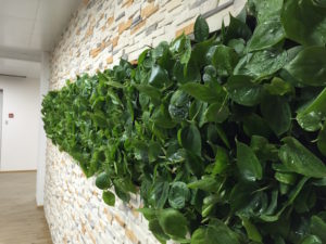 Растения, воздухообмен, когнитивные изменения