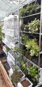 Вертикальные конструкции для садов и огородов в Тимирязевской Академии.