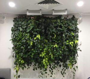 Как вертикальные сады в офисе помогают справиться со стрессом.