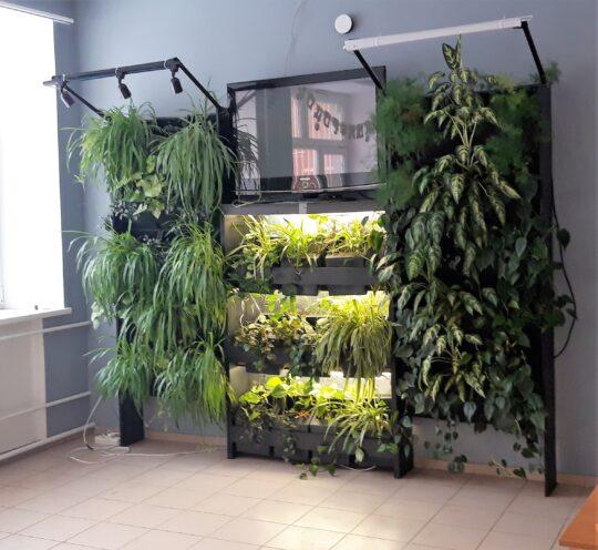 оздоровительный сад и вертикальная оранжерея