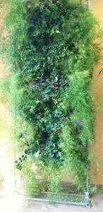 Отличительные черты вертикального сада на модулях редкого полива