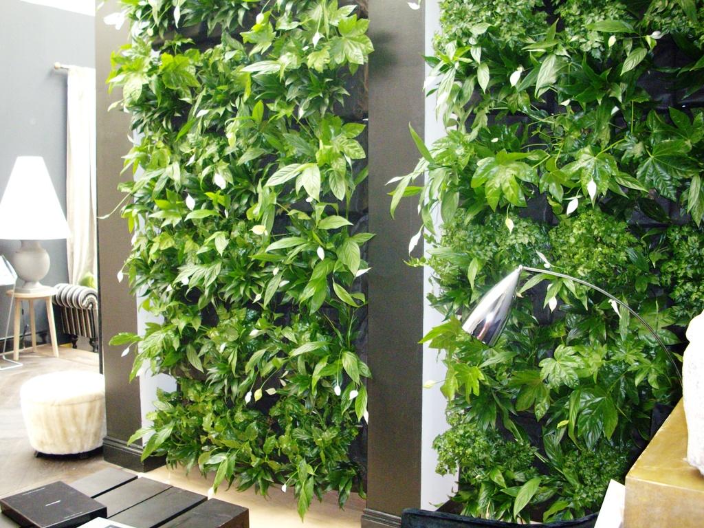 комнатные растения каталог фото названия