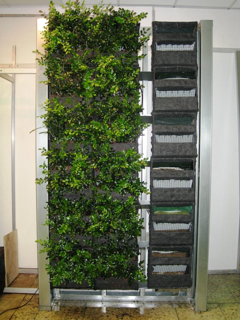 Вертикальные озеленение своими руками
