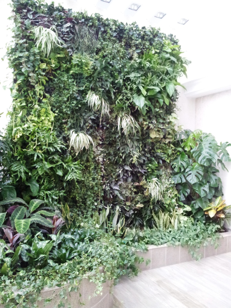 носитеL: технология выращивания вертикального озеленения