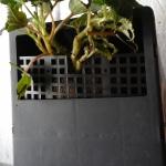 Если растение требует глубокого горшка, то поднимаем растение наверх, заполняем пустоты грунтом и  придавливаем малой решеткой от высыпания грунта