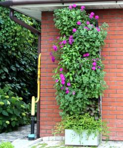 Вертикальный сад Екатерины Локшиной