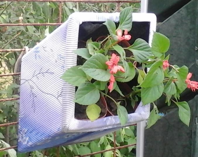 преимущества модуля редкого полива для создания вертикального сада, вертикального озеленения Вертикальные лечебные сады