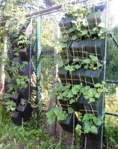 Подвесные конструкции с огурцами и помидорами