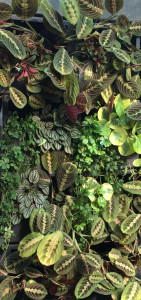 "группа растений ООО ""Конвалярия"" г.Москва galagarden@yandex.ru Телефон whatsapp +7903 961 68 27"