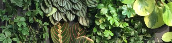 микс-группа растений 3